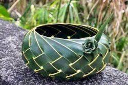 panjang-ilang-kelapa