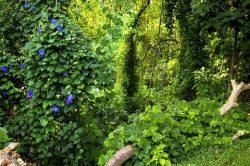 apa itu bosque hutan