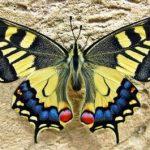 mariposa-apa-itu Logo Icon PNG
